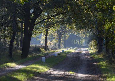Laan op Zonnebeek